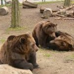 Za medvědy  do Berouna
